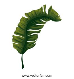tropical and exotic palm leaf