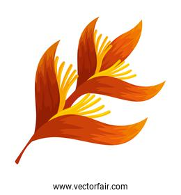 heliconia flower tropical plant vector