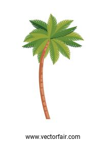tropical tree palm icon vector