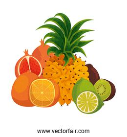 group of tropical and fresh fruits