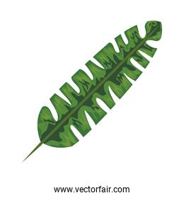 exotic and tropical leaf plant