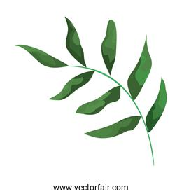 branch with leafs plants icon