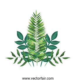 exotic and tropical leafs with branches decoration