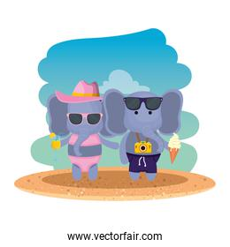 elephants couple with photographic camera and cocktail on the beach