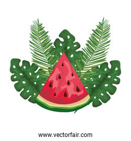 fresh watermelon tropical fruit with leafs palms