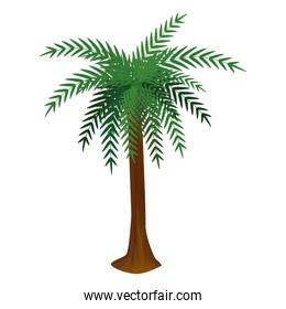 tree palm summer isolated icon