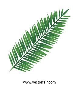 exotic leaf palm tropical icon
