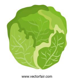 fresh cabbage vegetable healthy icon