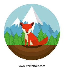 wild canadian red  fox with landscape