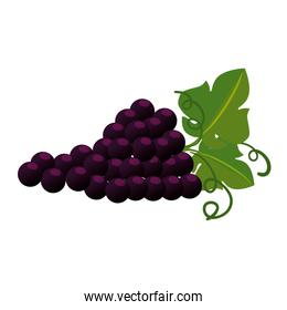 grapes cluster isolated icon