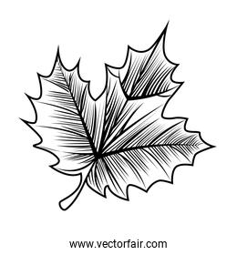 grape leafs linear style  icon
