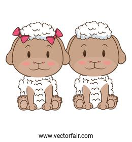 cute and adorable couple sheep characters