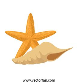 starfish with snail shell over white