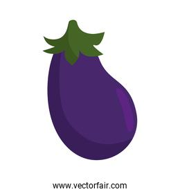 Eggplant fresh vegetable