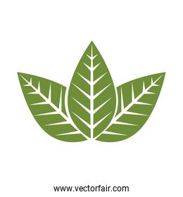 Leaves eco symbol