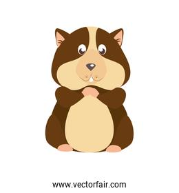 cute squirrel animal isolated icon