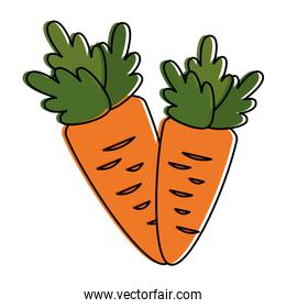 carrots fresh vegetables icon
