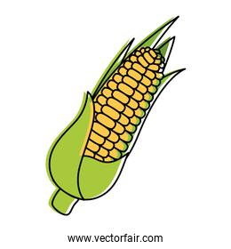 corn fresh vegetable icon