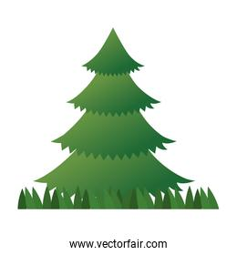 pine tree plant with grass