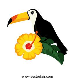 toucan exotic bird with flower