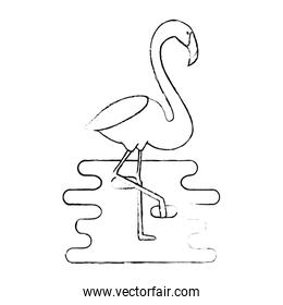 exotic bird flamingo with water