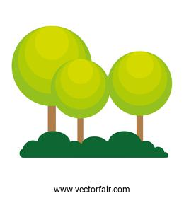 trees plants forest icon