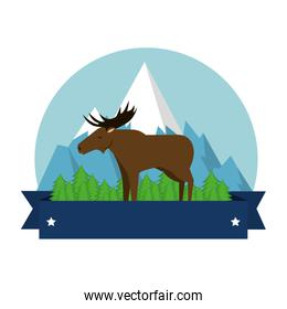 Canadian elk wild with mountains