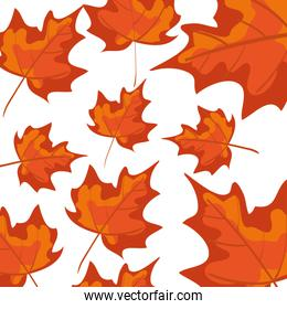 autumn dry maple leafs nature pattern