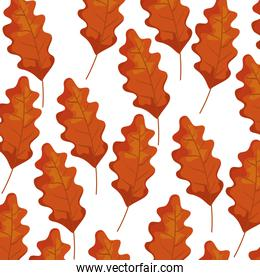 autumn dry leafs nature pattern