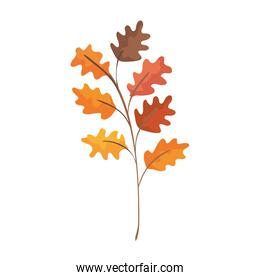autumn branch with leafs isolated icon