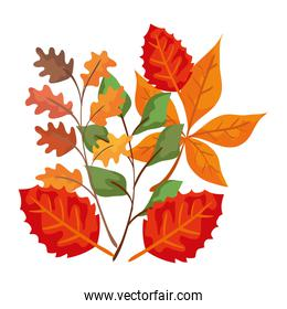 autumn branches with leafs isolated icon