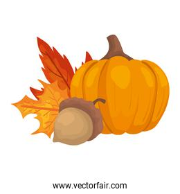 autumn pumpkin with nut and leafs
