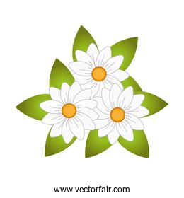 sweet flower isolated icon