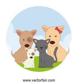cute pets characters icon