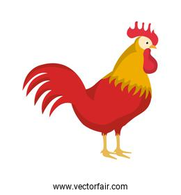 colorful side view picture rooster icon animal