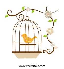 cute bird in cage