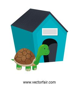 cute turtle pet isolated icon