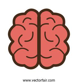 red brain front view,vector graphic