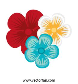colorful flowers,vector graphic