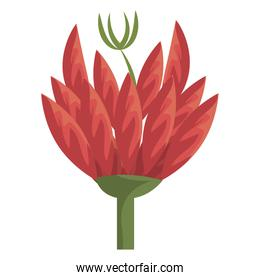 colorful red and green flower, vector graphic
