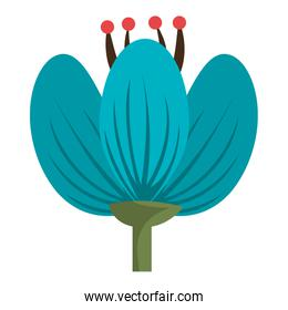 colorful blue flower, vector graphic