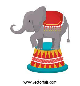 Circus elephant animal cartoon design, vector illustration.