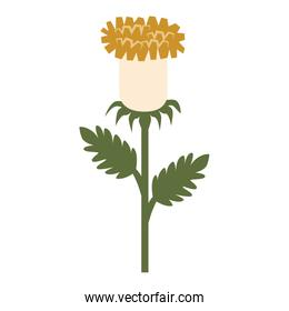 Flower floral colorful icon vector illustration.