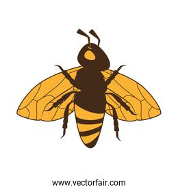 bee insect honey icon vector graphic