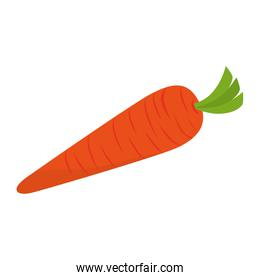 carrot vegetable natural icon vector graphic