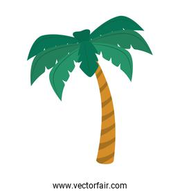palm summer beach icon vector graphic