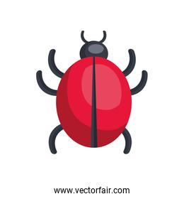 red ladybug insect