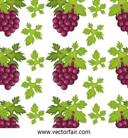 bunch of grapes fruit  background