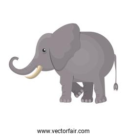 elephant indian isolated design