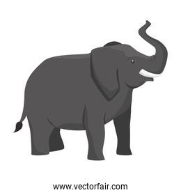 elephant animal big isolated
